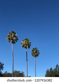 Three palm trees in a diagonal line against blue sky