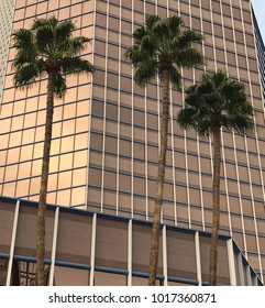 Three palm trees in front of a high-rise building with glass facade