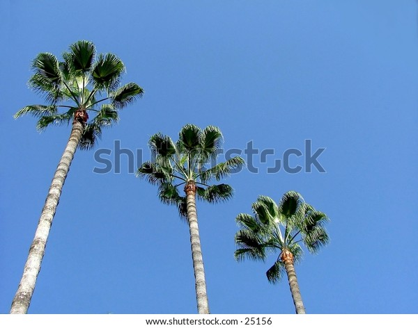 Three palm trees in a row on a deep blue sky