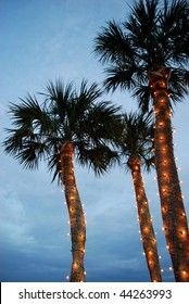 Three palms with Christmas light decorations