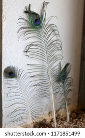 Three peacock feathers put up in a garden for decoration.