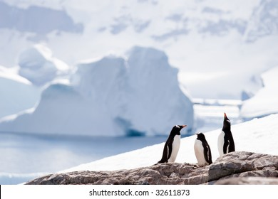 three penguins in an icy world