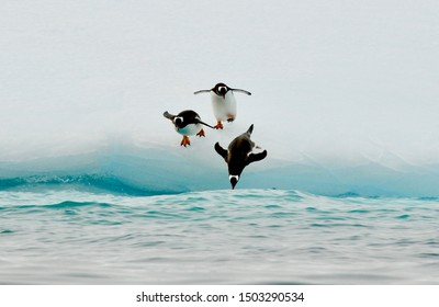 Three penguins are jumping into the ocean.