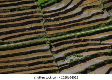 Three people are farming in the rice fields