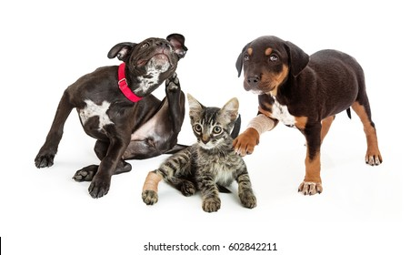 Three pets in need of medical veterinary care for injuries and fleas