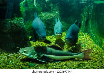 three photogenic fish and catfish in the Aquarium.