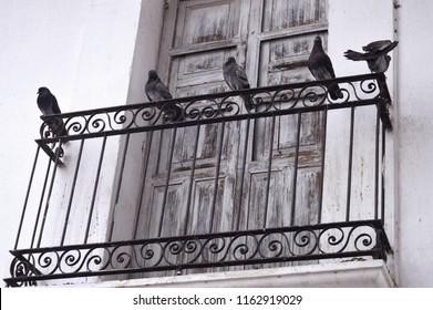 Three pigeons on the balcony. Street of Cuetzalan Del Progreso, Puebla Mexico.