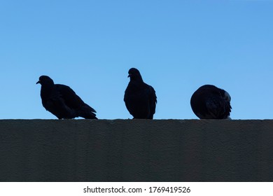three pigeons sit on a concrete roof