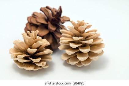 Three pine cones on white