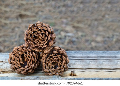Three Pinecones stacked and photographed from the base while resting on a log in the Arizona forest.