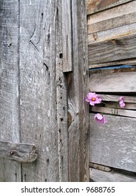 Three pink flowers decorate weathered old wooden planks on the side of a barn.