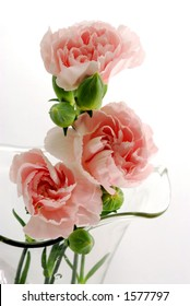 Three pink mini Carnations in a glass vase