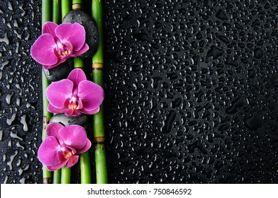 Three pink orchid with bamboo grove,stones  on wet background