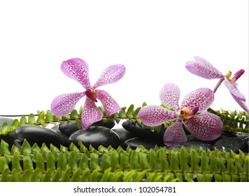 Three pink orchid with green fern on pebbles