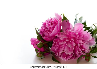 Three pink peony on a white background. Bouquet for Valentine's Day