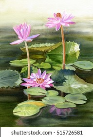 Three Pink Water Lilies with Pads.  Watercolor illustration, painting, with three water lilies growing out of a pond with colorful lily pads.