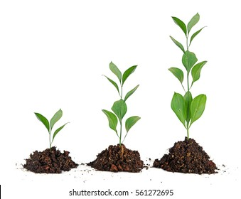 Image result for three in plants