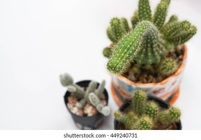 three pots of cactus with selective focus on white table