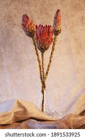 Three protea flower heads in a glass vase on a textured brown background