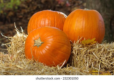 Three pumpkins on wheat straw