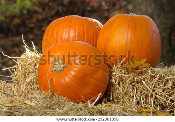 Three pumpkins on wheat straw