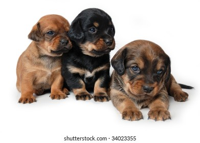 Three puppies isolated on white background