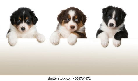 Three puppies looking over a wall