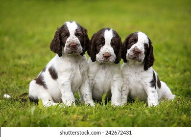 Three puppies on the grass