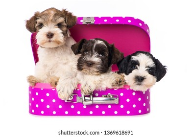 Three puppies in a pink suitcase on white background