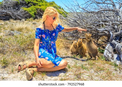 Three Quokka sniffing girl hand in a sunny day outdoors, summer season, Australia. Blonde caucasian tourist woman interacts with curious Quokka in the wilderness of Rottnest Island, Western Australia.