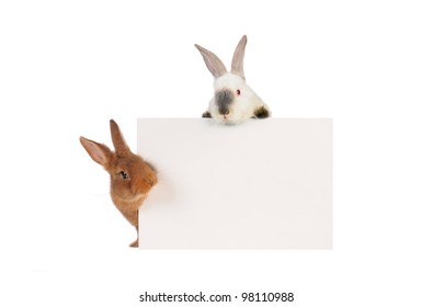 three rabbit with with a white background for text drawing