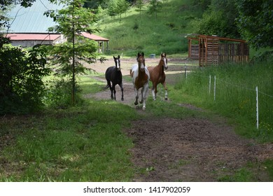 Three Ranch Horses Race to Grassy Meadow