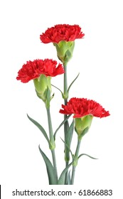 Three Red Carnation on White background