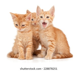 Three red kittens on a white isolated background look ahead