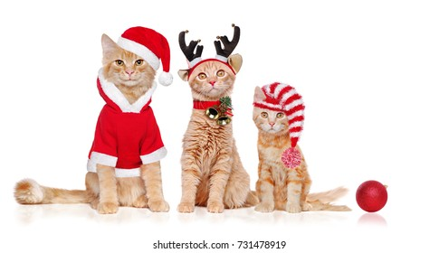 Three red kittens wearing christmas outfit as santa, reindeer and santas's helper