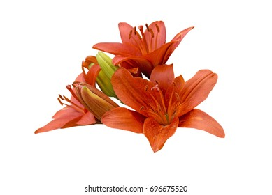 Three red lily flower isolated on white background