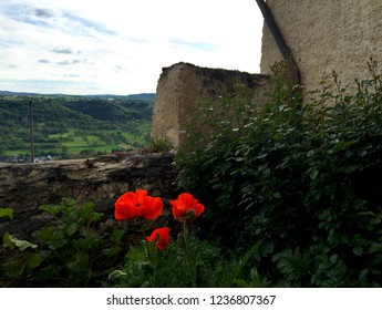 Three red poppies are blooming beside an old stone wall. A village with farmland is in the distance. The sky is blue with white clouds.
