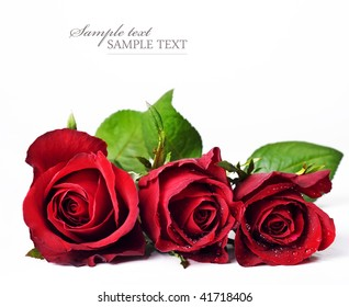 Three red roses against a white background with space for text