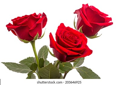 Three red roses isolated on white background