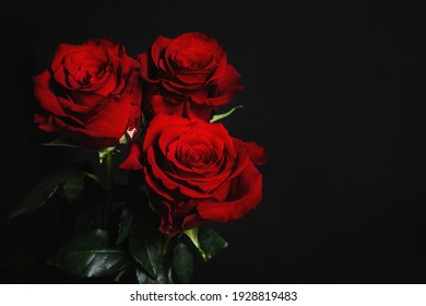 Three red roses on a black background. Banner for web design, gift card. Valentine's Day, wedding, birthday, International Women's Day March 8, Mother's Day.