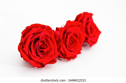 Three red roses, preserved, isolated on white background.