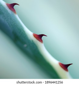 Three red thorns on a stem