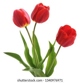 Three red tulips isolated on a white background.