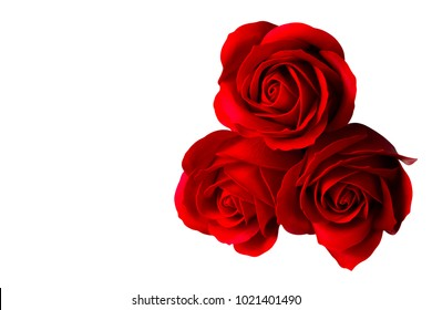 Three rose flowers isolated on white background with clipping path