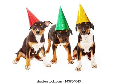 Three Rottweiler mixed breed puppies wearing colorful birthday party hats