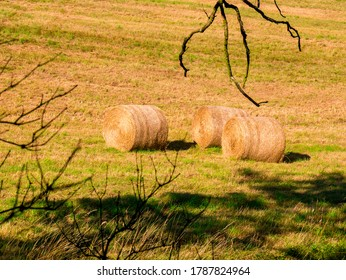 Three round bales of straw in a sunlit meadow, framed by dry tree branches in the foreground