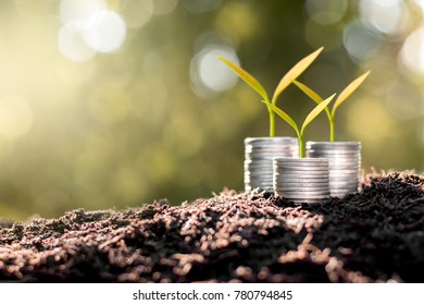 Three rows of coins placed on fertile soil. While seedlings are growing.