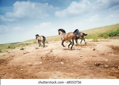 Three running horses. Rear view. Kazakhstan. Natural light and colors