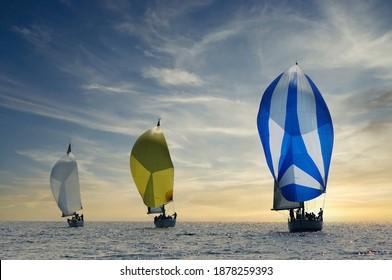 Three sailboats with spinnakers sailing at sunset