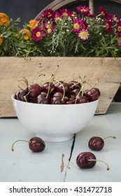 Three scattered cherries in a table and more in white bowl, stand on a blue wooden table with flowers in a wooden box